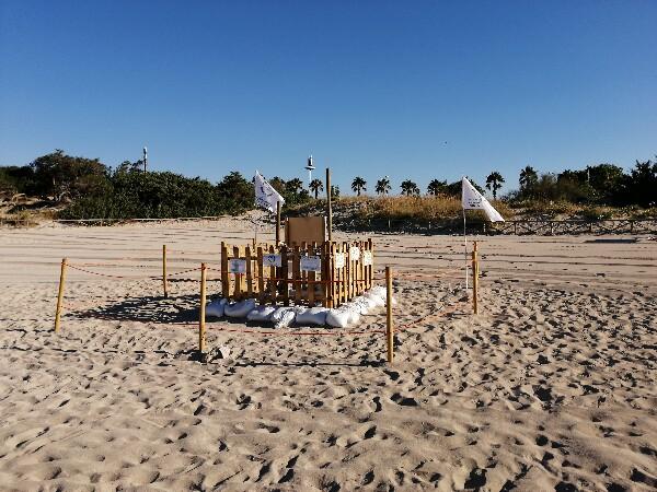 Foto 20: Spiaggia delle Dune - sito nidificazione 2020 tartarughe Caretta Caretta