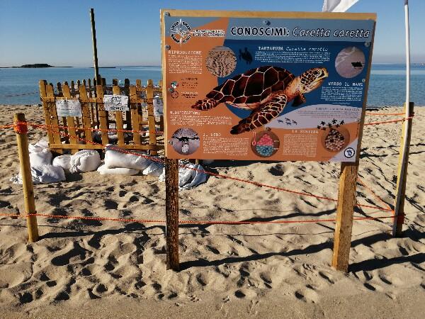 Foto 21: Spiaggia delle Dune - sito nidificazione 2020 tartarughe Caretta Caretta
