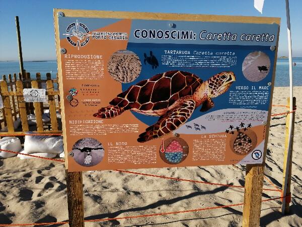 Foto 22: Spiaggia delle Dune - sito nidificazione 2020 tartarughe Caretta Caretta