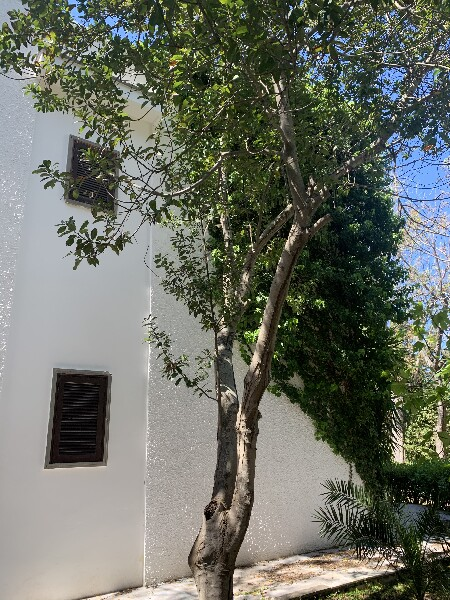 Villette a Gallipoli, affitti salento