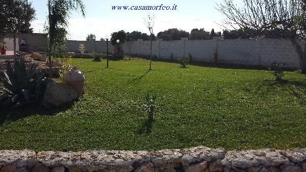Foto 3: Il giardino