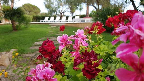 Foto 5: Particolare giardino