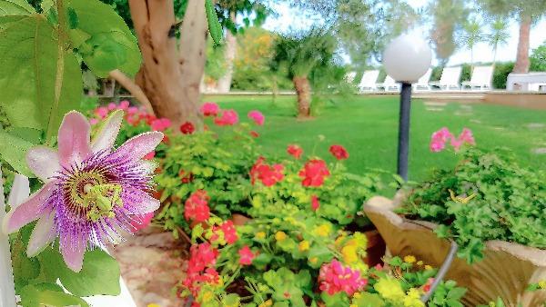 Foto 6: Particolare giardino