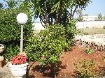 Villette a Porto Cesareo, affitti salento