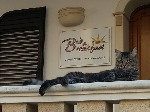 Bed & breakfast a Casarano, salento vacanze