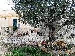 Case vacanza tra gli ulivi a S.Maria di Leuca. - Visualizza foto e altri dettagli.
